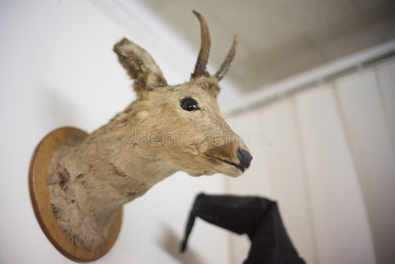在墙壁上的被充塞的鹿 库存照片