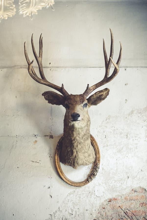 在墙壁上的鹿头 一个鹿头和葡萄酒框架的动物标本剥制术动物在老腐烂的砖墙上的 r 免版税图库摄影