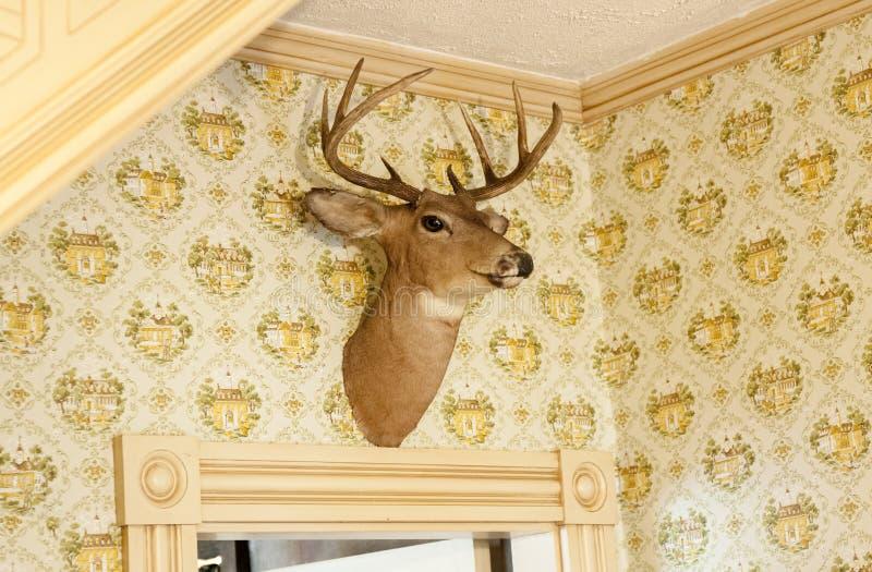 在墙壁上的鹿顶头战利品 免版税图库摄影