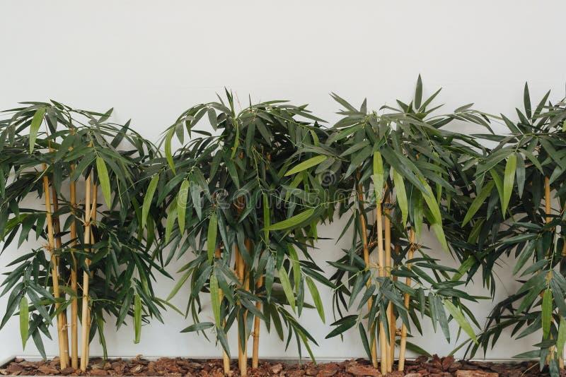 在墙壁附近的绿色植物 免版税库存照片