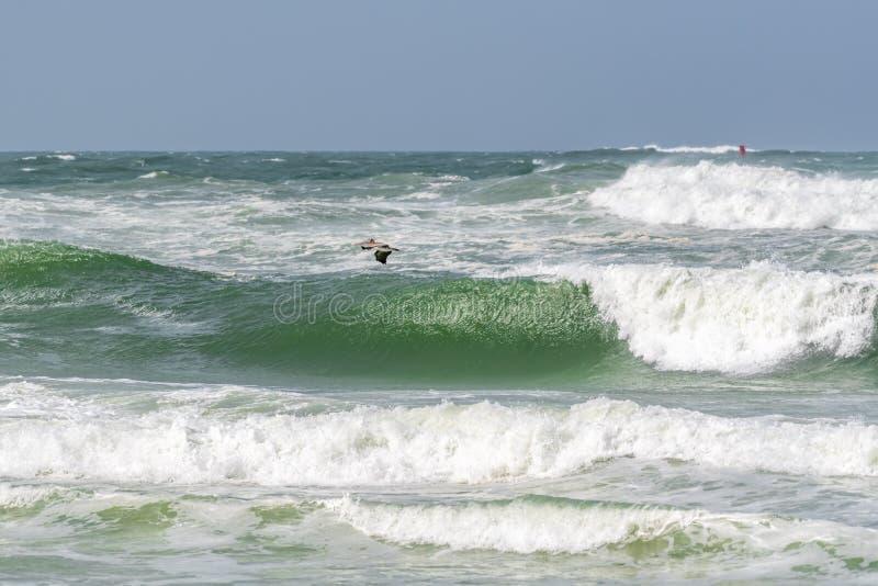 在墨西哥湾的鹈鹕飞行 免版税库存照片