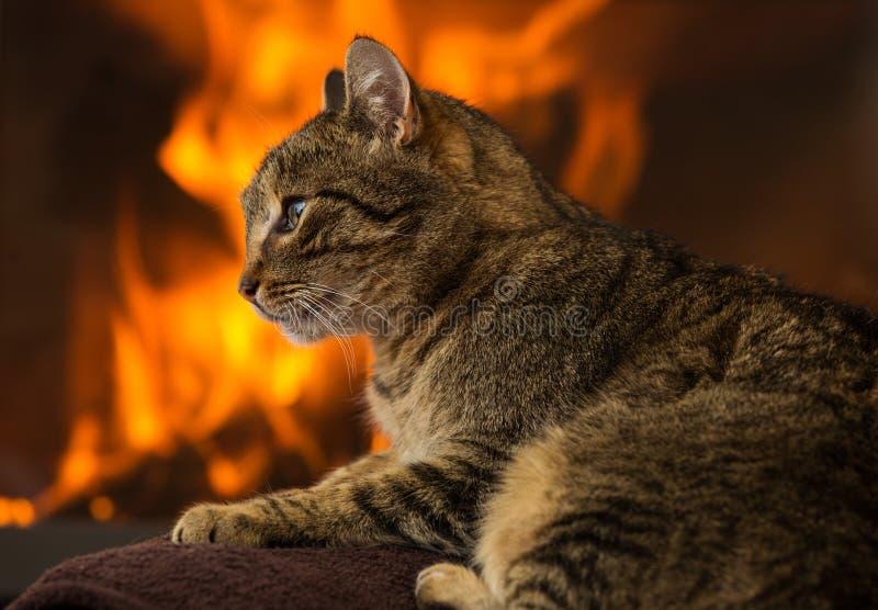 在壁炉前面的猫 免版税库存照片