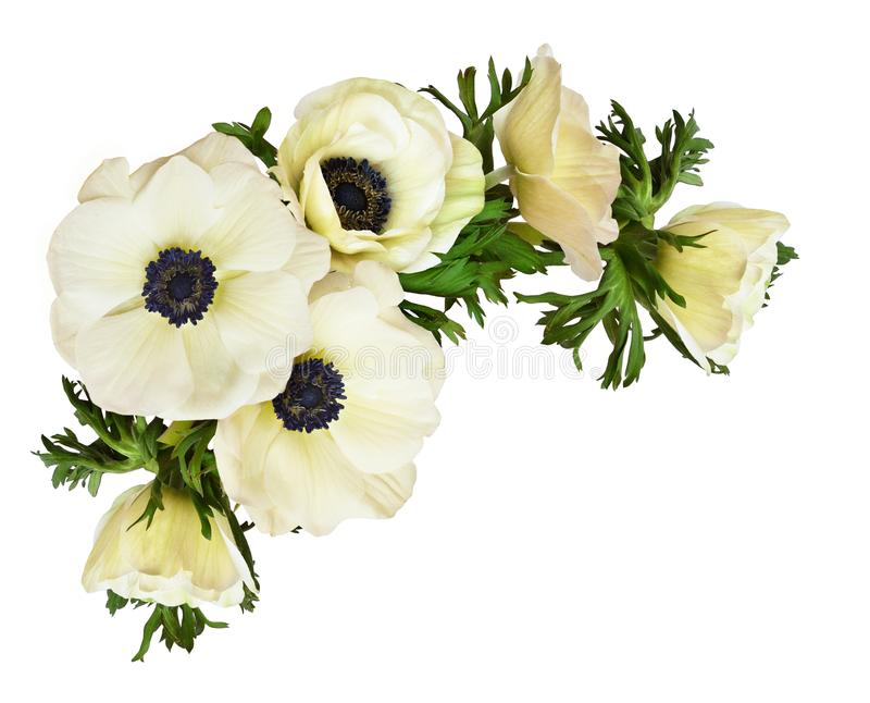 在壁角安排的白色银莲花属花 免版税库存照片