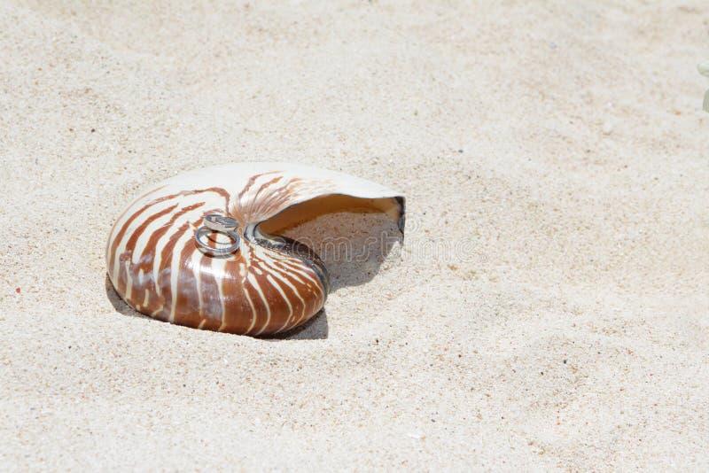 在壳的婚戒在海滩 免版税图库摄影