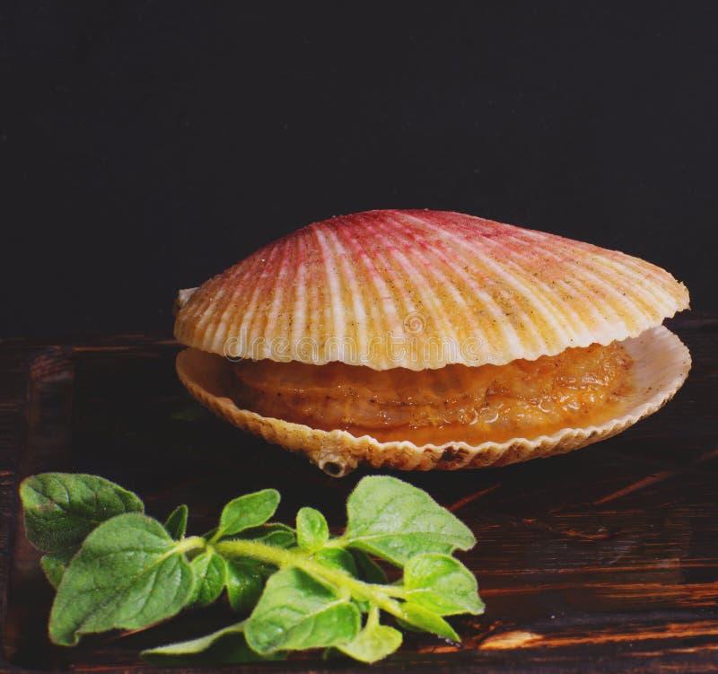 在壳的扇贝在板,健康食品说谎 库存图片