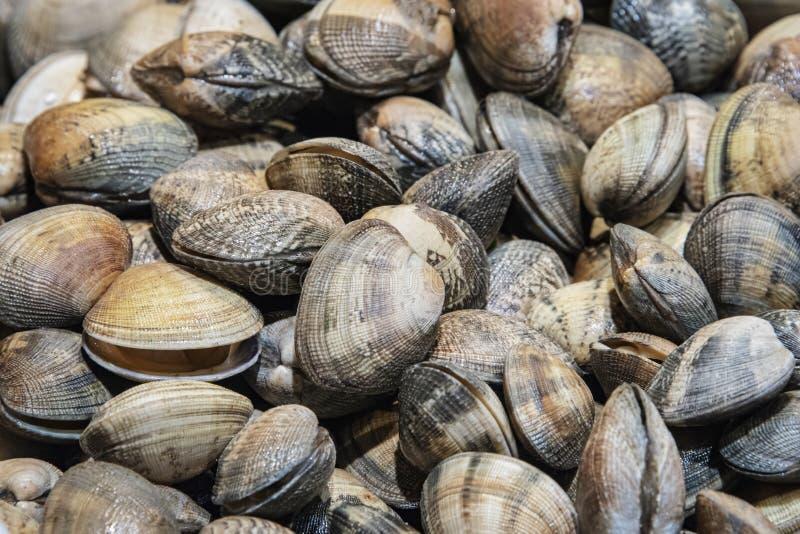 在壳的新鲜的蛤蜊 图库摄影