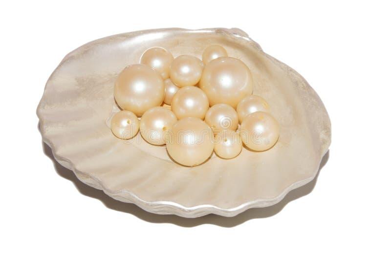 在壳的珍珠 库存图片