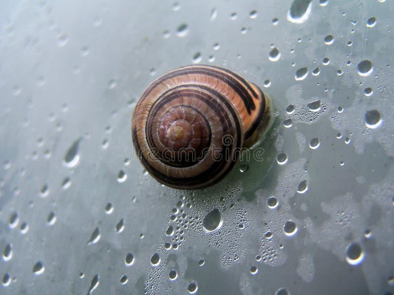 在壳的蜗牛 免版税库存图片
