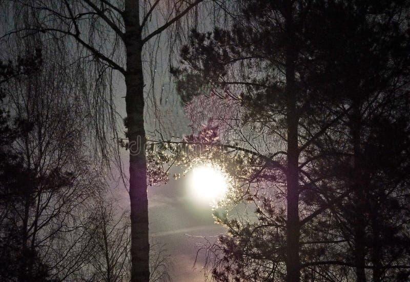在处女座星座夜空星的月亮上升 免版税库存图片