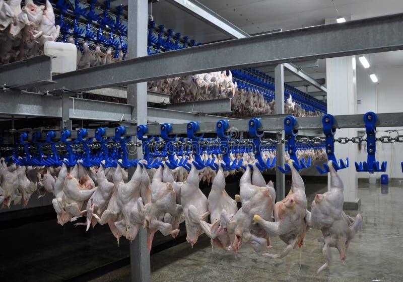 在处理的商店禽畜尸体 免版税库存照片