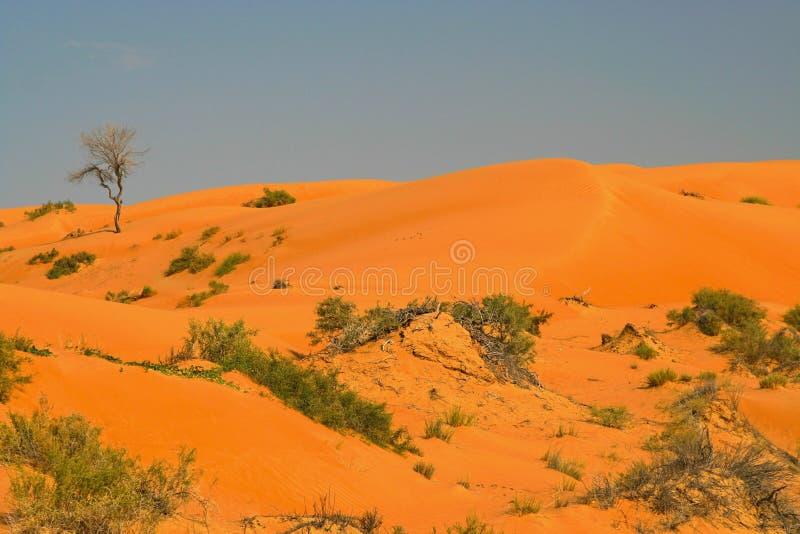 在备用的植被的看法在反对天空蔚蓝的红色橙色沙丘与被隔绝的绿色植物和树 库存照片