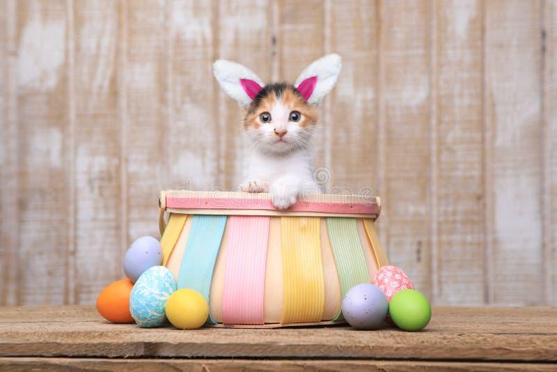 在复活节篮子佩带的兔宝宝耳朵里面的可爱的小猫 库存照片