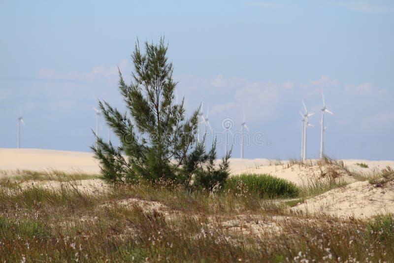 在夏天下午的沙漠视图 免版税库存图片