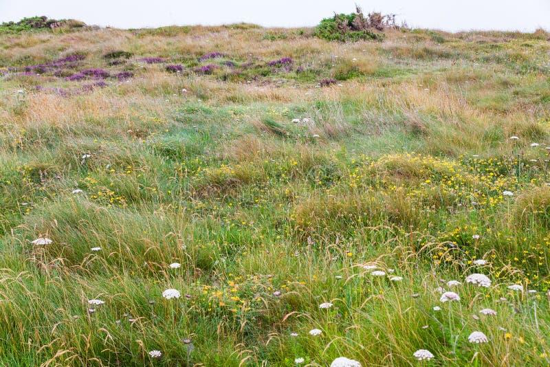 在夏天停泊英吉利海峡岸的土地  库存照片
