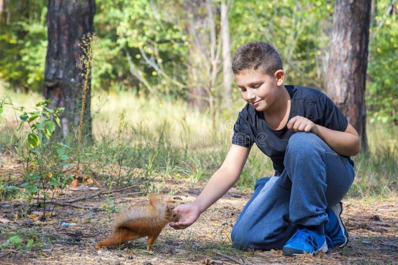 在夏天在森林男孩喂养与坚果的灰鼠 免版税库存照片