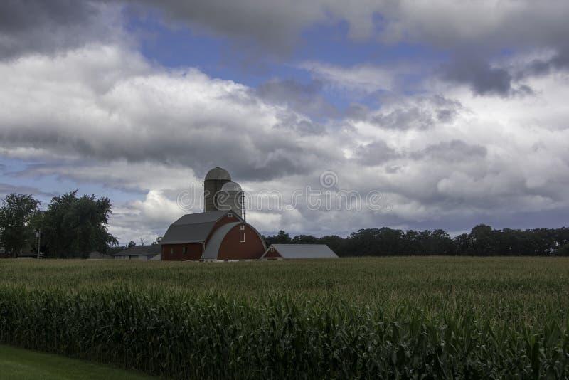 在夏天天空下的玉米庄稼 免版税库存图片