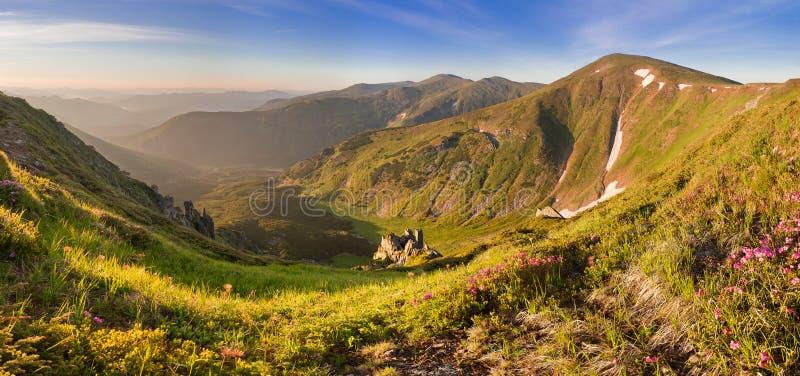 在夏天山的不可思议的桃红色杜鹃花花 剧烈的sce 库存照片
