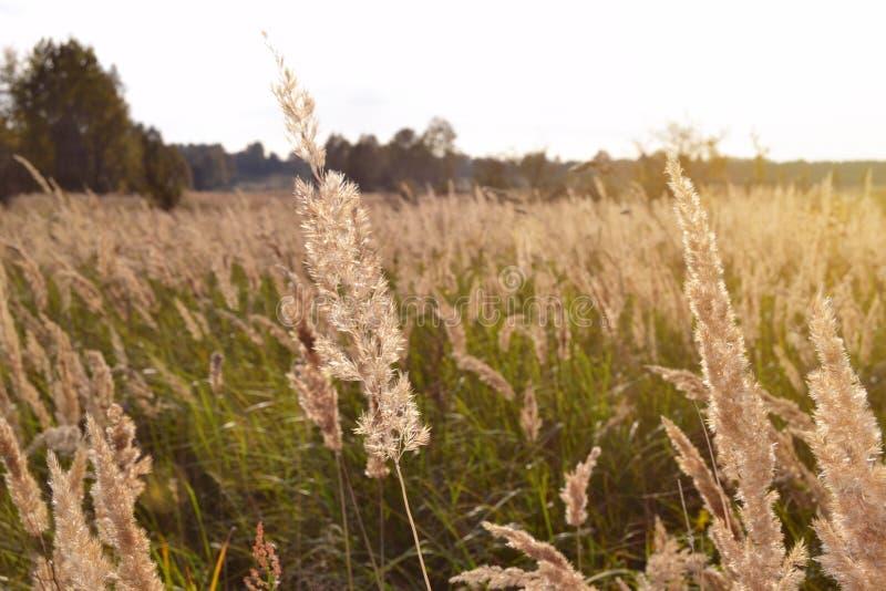 在夏天开花的草甸的日出 库存图片