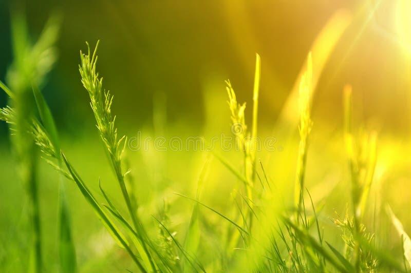 在夏天开花的草甸的日出 库存照片