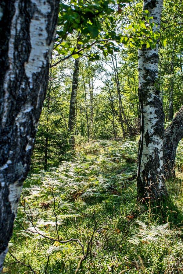 在夏天拍的照片,在绿色森林A非常宜人的光、许多绿叶和和平 山森林 免版税库存图片