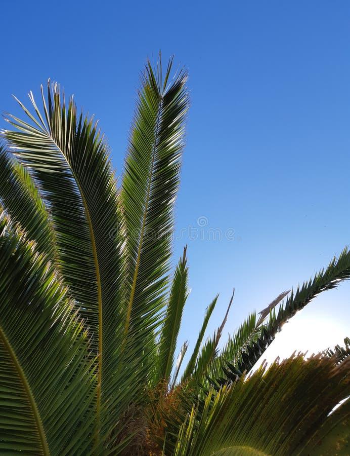 在夏天晴朗的天空蔚蓝的棕榈树 免版税库存照片