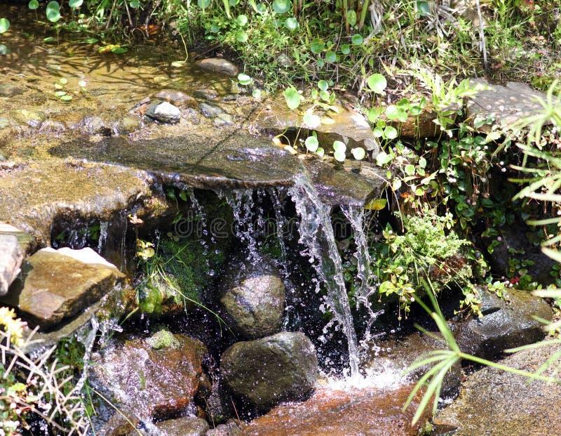 在夏天期间,一点瀑布在密林的河在哥斯达黎加 免版税库存照片