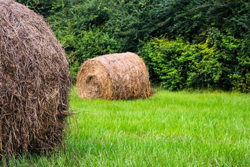 在夏天期间,圆的大包在领域的干草 库存图片