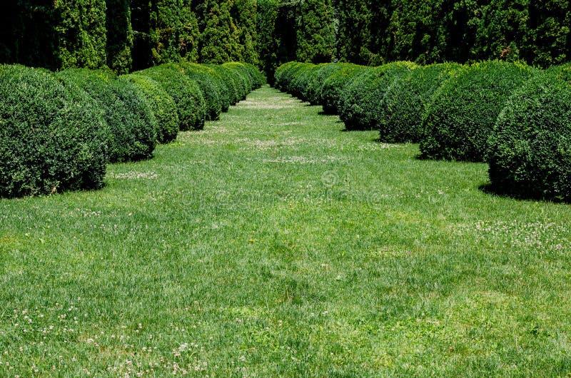 在夏天期间,植物的公园 库存图片