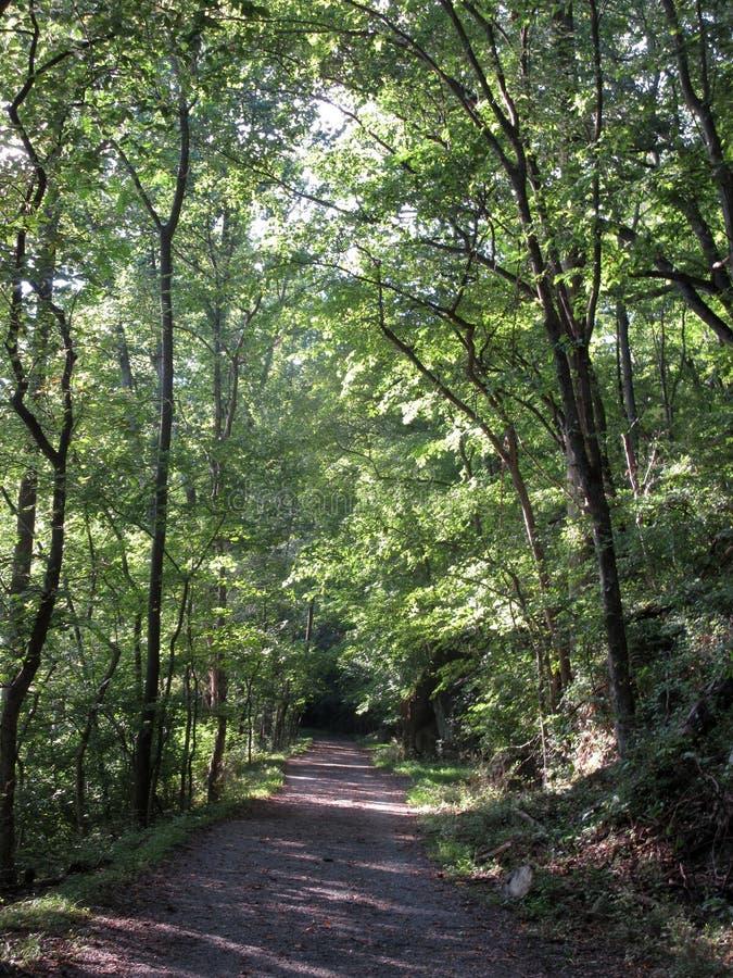 在夏天期间,高森林在马里兰 免版税库存图片