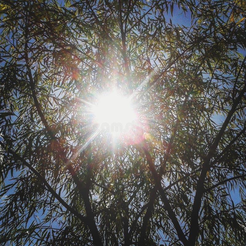 在夏天期间,阳光和树 库存图片