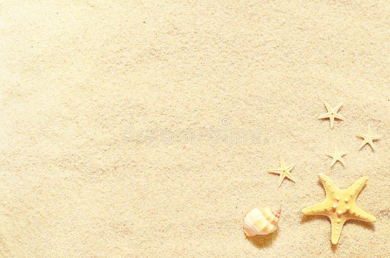 在夏天海滩和沙子的贝壳作为背景 截去的查出的路径海运轰击白色 库存图片