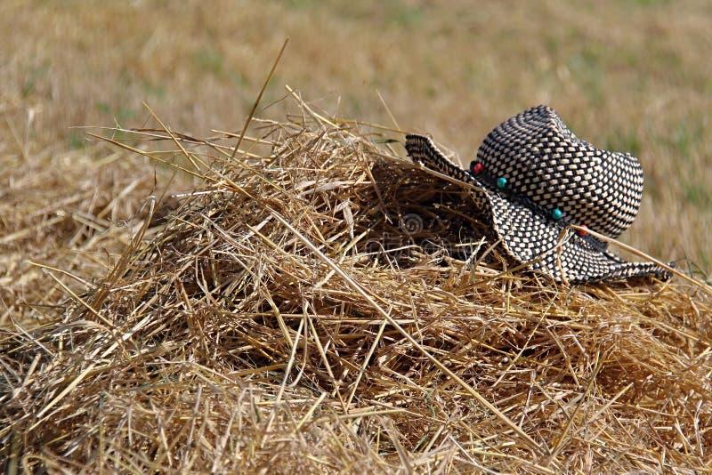 在夏天粮田的帽子 库存图片