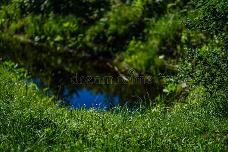 在夏天绿色自然的草和叶子纹理 库存图片