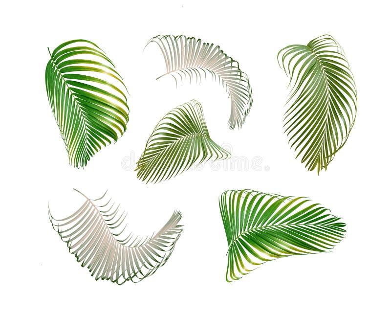 在夏天背景的白色隔绝的绿色棕榈叶 向量例证