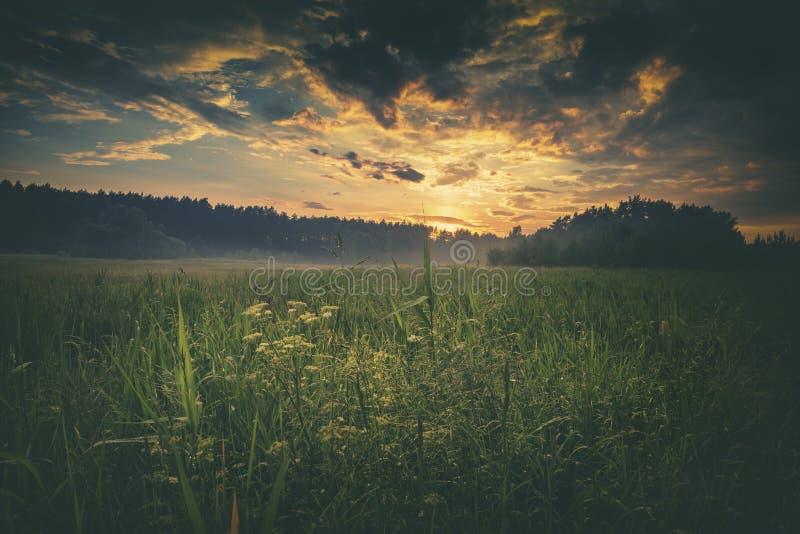 在夏天草原的剧烈的日落云彩 免版税库存照片