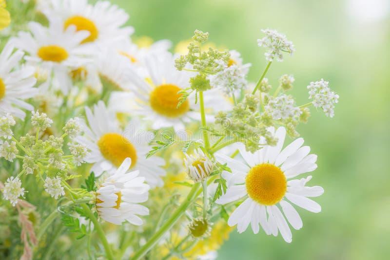 Download 在夏天草甸的野花 库存图片. 图片 包括有 潮湿, 绿色, 农村, bossies, 牧场地, 花束, 纯度 - 62536307