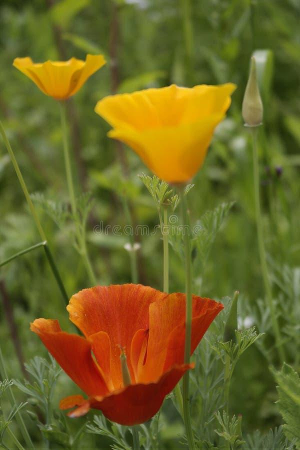在夏天草甸的野花 库存图片
