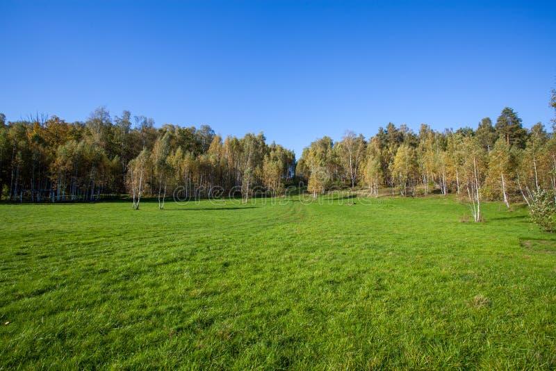 在夏天领域的桦树小灌木林 免版税图库摄影