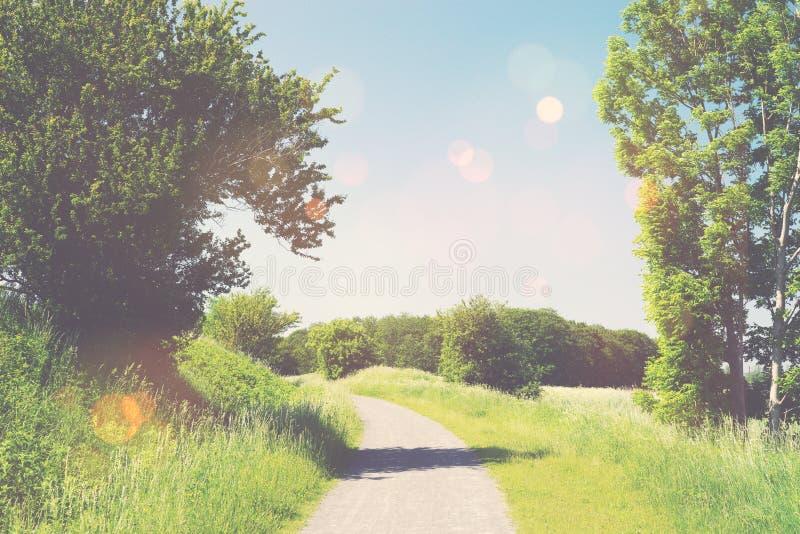 在夏天风景的自然痕迹 免版税库存图片