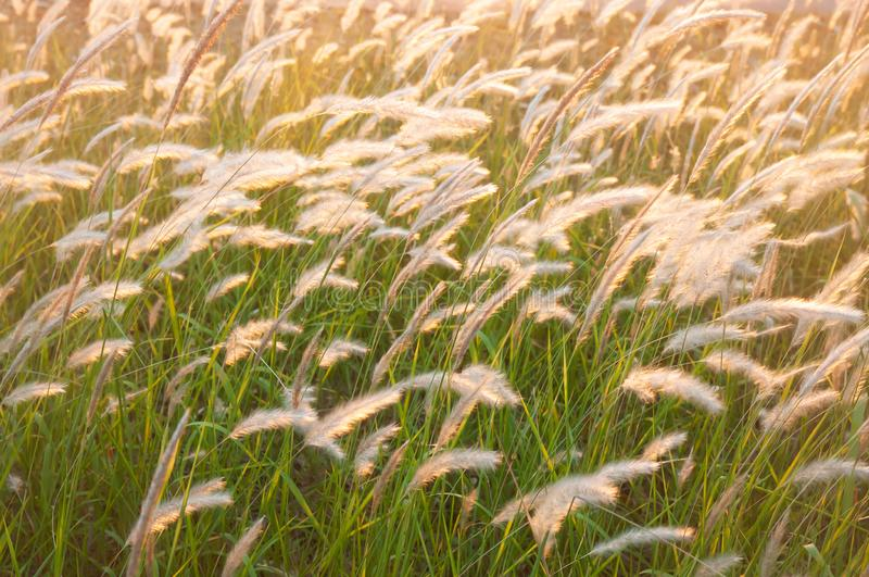 在夏天黄昏的美丽如画的草花田 免版税库存照片