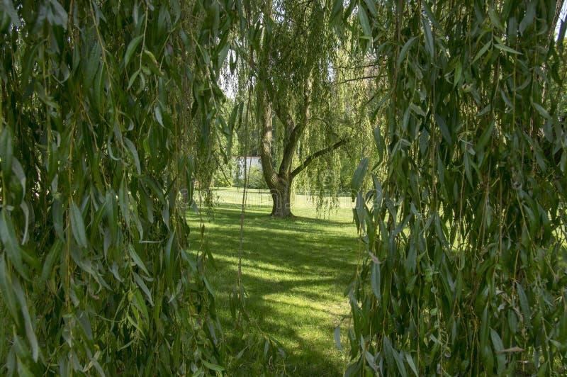 在夏天,绿色自然,树阴影,绿叶期间,公园 库存图片