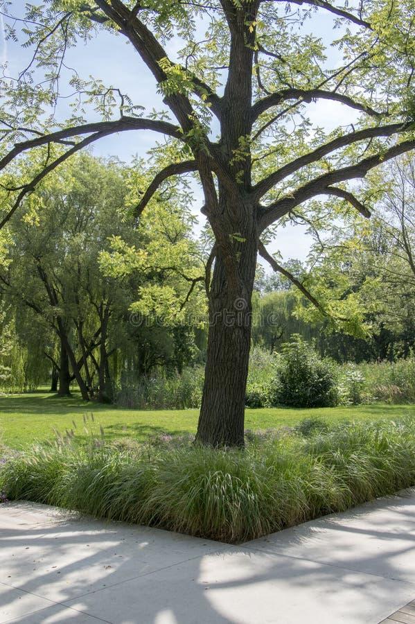 在夏天,绿色自然,树阴影,绿叶期间,公园 库存照片