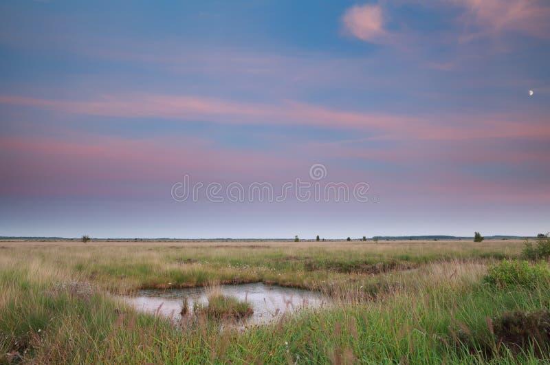 在夏天黄昏的沼泽 库存照片