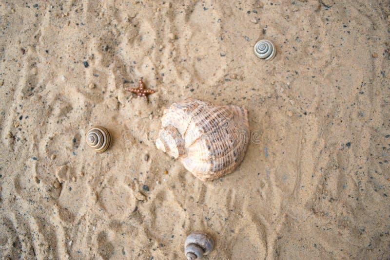 在夏天晴朗的海滩概念的沙子 库存图片