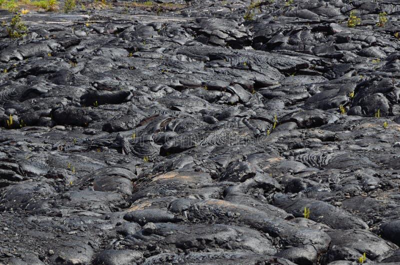 在夏威夷海岛上的火山岩床 图库摄影