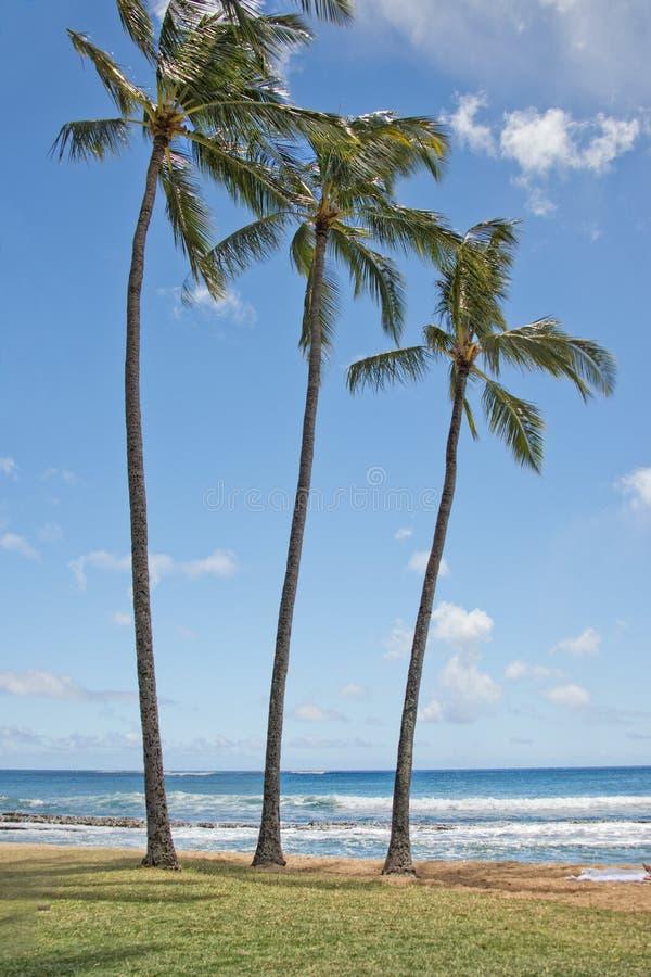 在夏威夷Poipu海滩风景的棕榈 免版税库存照片