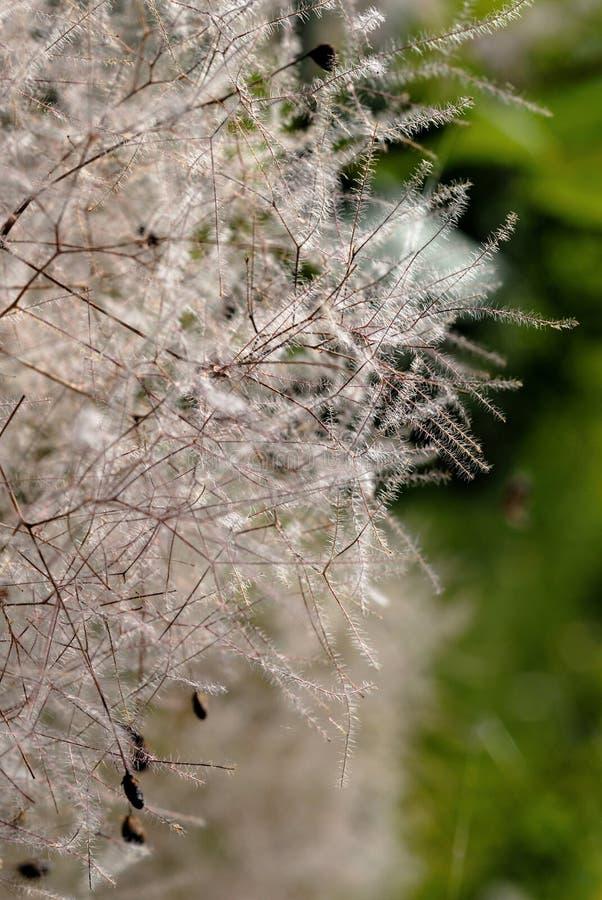 在夏季特写镜头的植物绽放 库存图片