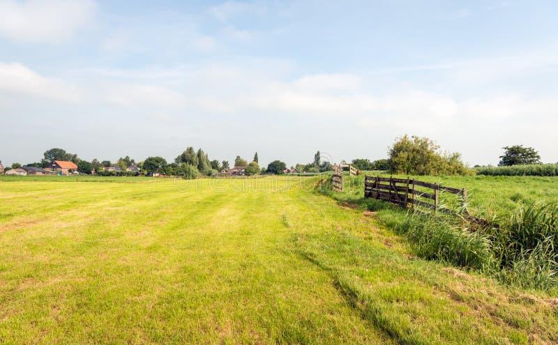 在夏季的典型的荷兰农业风景 库存图片