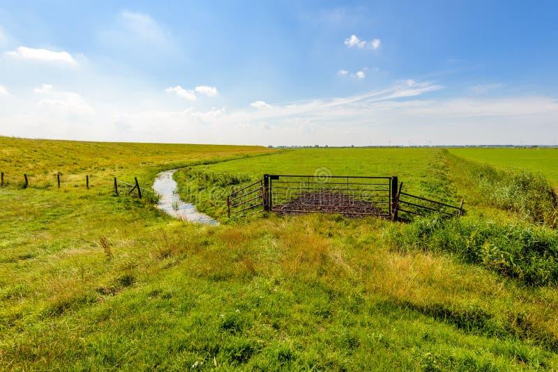 在夏季的典型的荷兰开拓地风景 图库摄影