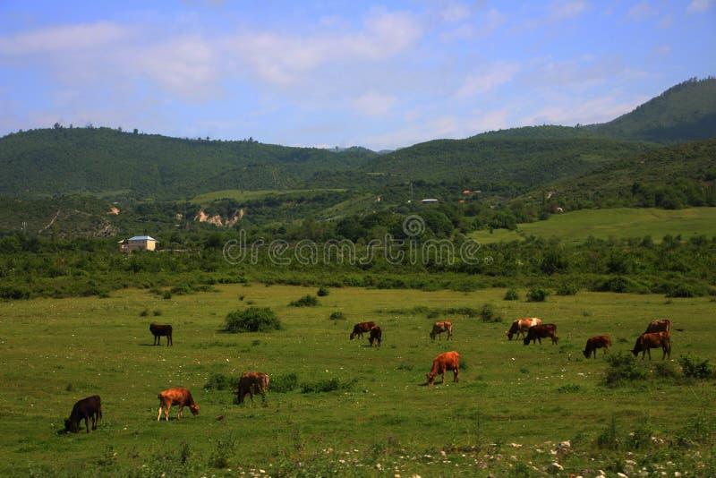 在夏季的农村风景 库存照片